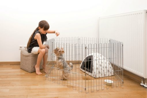 Girl feeding a dog in the animal cage