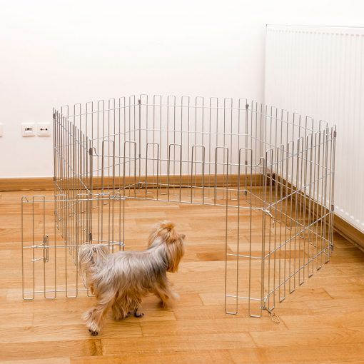 Dog entering the animal cage
