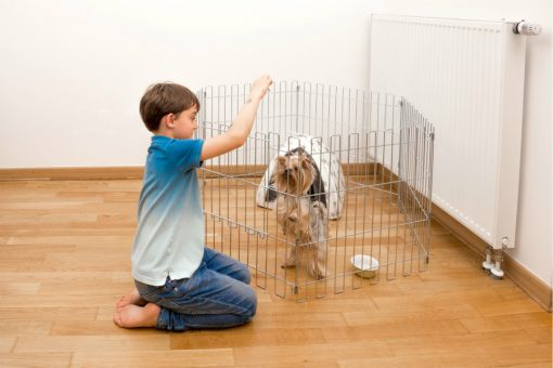 Boy feeding a dog in an animal cage