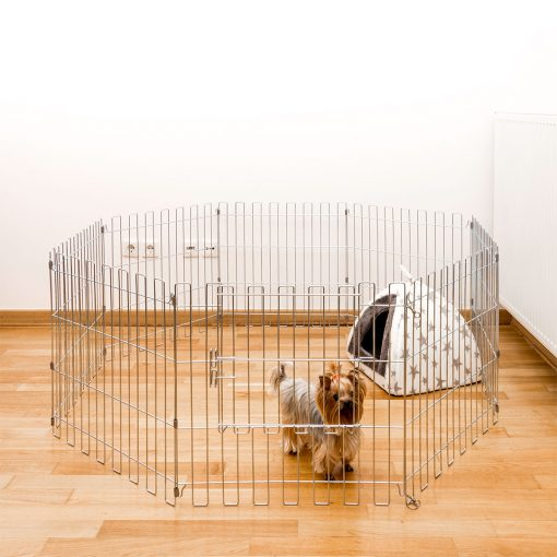 A dog inside the animal cage
