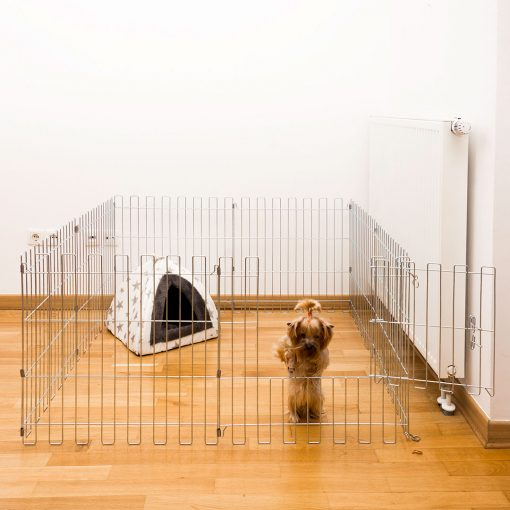 A dog exiting the animal cage