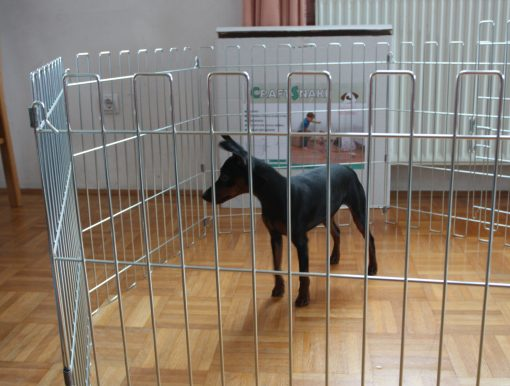 Animal cage with a dog