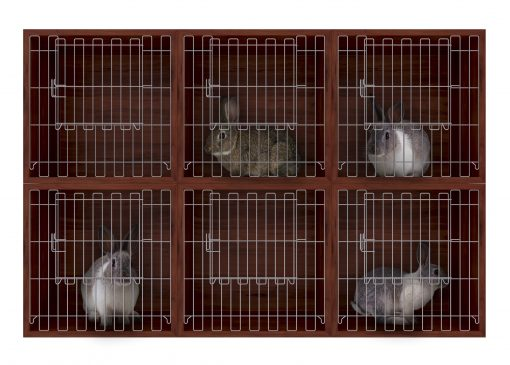 Animal cages with rabbits